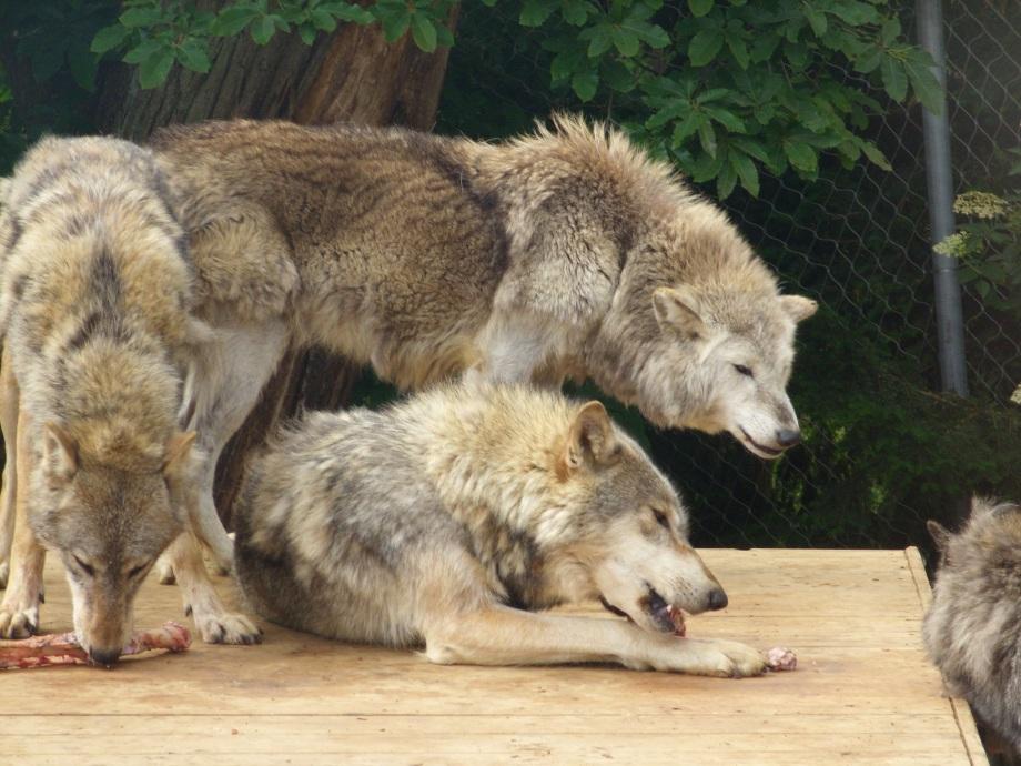 zoo 2011 030